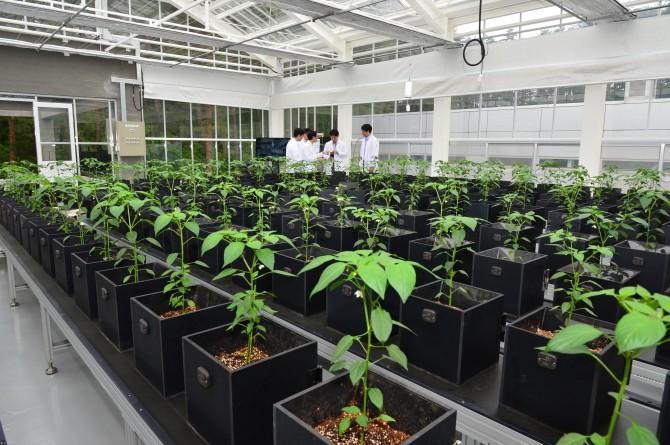한국과학기술연구원(KIST)이 이끄는 '스마트팜' 융합연구단은 농업에 정보통신기술(ICT)을 접목한 시스템을 개발해 국내 농가에 보급할 예정이다.  - 국가과학기술연구회 제공